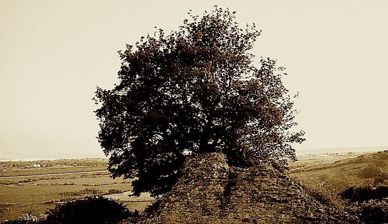 """""""La Cupa"""", Fabbula di un omo che divinne un albero"""