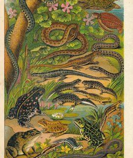 Antique Chromolith, The British Reptiles, 1890