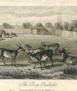 Antique Engraving Print, The Deer Paddock, 1855