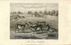 Antique Engraving Print, The Deer Paddock, 1855