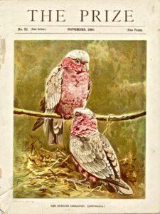 Antique print, The Roseate Cockatoo, 1895