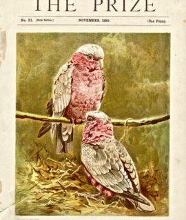 Antique print, The Roseate Cockatoo, 1895