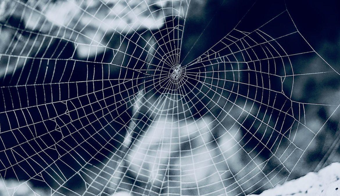 Il ragno e la ragnatela nella simbologia erotica della trama