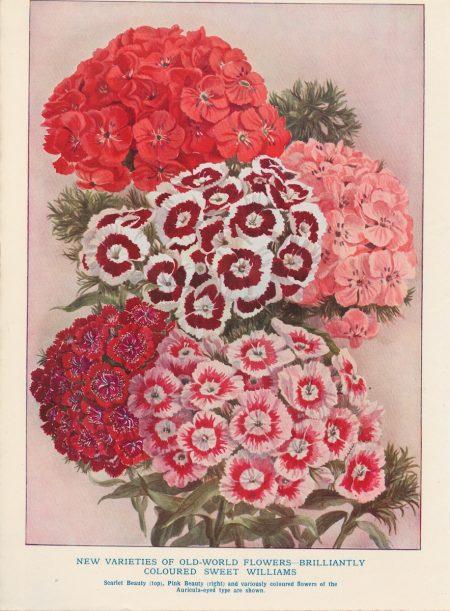 Vintage Print, New Varieties of Old-World Flowers, 1890 ca.
