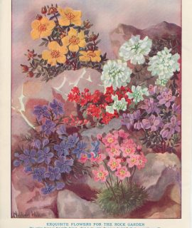 Vintage Print, Exquisite Flowers for the Rock Garden, 1890 ca.