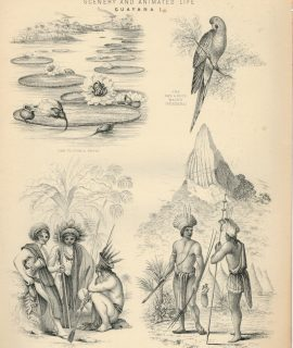 Antique Engraving Print, Scenery and Animated Life, Guayana, London. 1850
