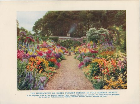 Vintage Print, The Herbaceus or Hardy Flower Border in Full Summer Beauty, 1902