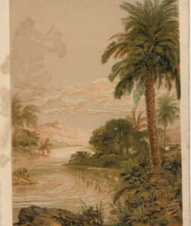 Vintage Print, A Three Planted by The Rivers of Water, 1880 ca.