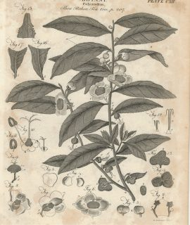 Lot of 8 Antique Botanical Engravings Prints, 1790