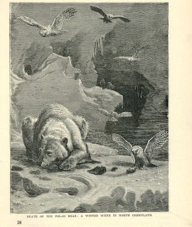 Antique Print, Death of the Polar Bear: A Winter Scene in north Greenland, 1890