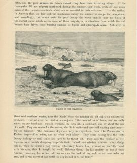 Lot of 7 Antique Prints, Life in Greenland, 1880
