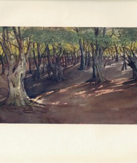 Vintage Print, The Heart of the Forest, Highbeech, 1909