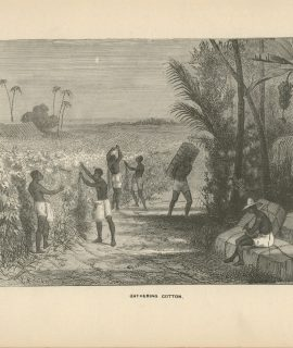 Antique Print, Gathering Cotton, 1870 ca.