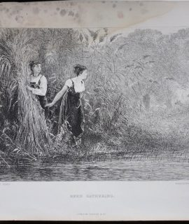 Antique Engraving Print, Reed Gathering, 1874