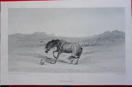Antique Engraving Print, Startled! 1819