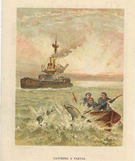 Antique Print, Catching a Tartar, 1890