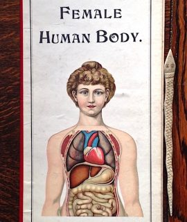 Philips' Anatomical Model of the Female Human Body. George Philip and Son London.