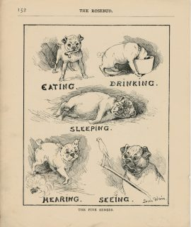 Vintage Print, The five senses, 1890