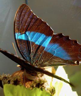 Vintage Butterflies Taxidermy Terrarium