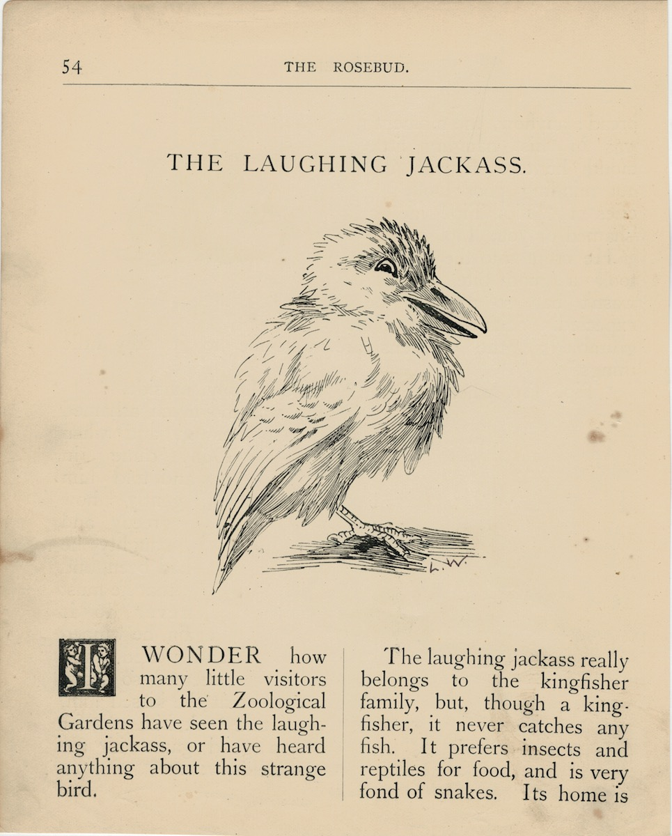 laughing jack ass