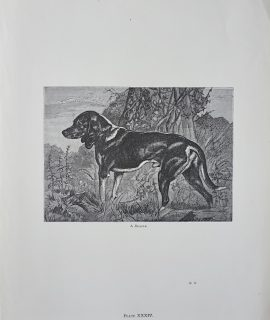 Vintage Print, A Beagle; on the Look-out, 1870