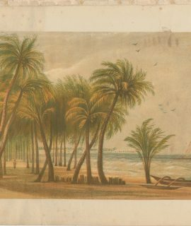 Vintage Print, Palm Trees on the Beach, 1890