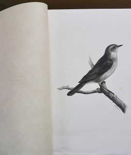 Vintage Engraving Print, The Nightingale, 1906 by Medland Lilian Marguerite, 1906