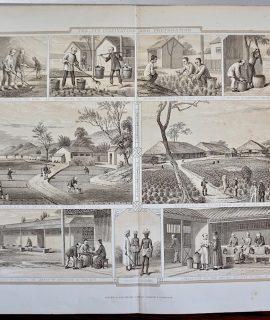 Antique Print, Tea Its Cultivation and Preparation, 1868