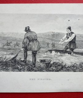 Antique Print, Net Fishing, 1860