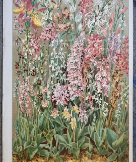 Antique Print, Our British Orchids, by John Allen, 1892