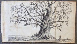 Antique Engraving Print, The Tree, 1760 ca.