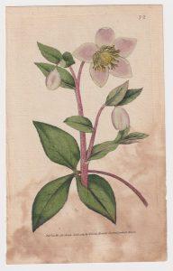 Antique Engraving Print, by W. Curtis, Botanic Garden Lambeth Marsh, 1789