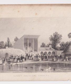 Antique Engraving Print, Surrey Zoological Gardens, 1850 ca.