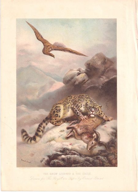 Vintage Print, The Snow Leopard & the Eagle, Ernest Griset, 1894