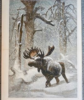 Antique Print, Winter, by J. Wolf, 1873