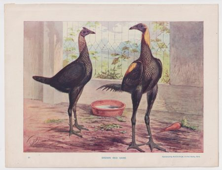 Vintage Print, Brown Red Game, 1890