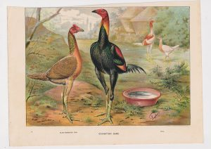 Vintage Print, Exhibition game, 1890