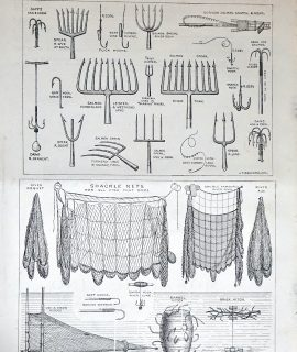 Antique Print, The International Fisheries Exhibition, 1883