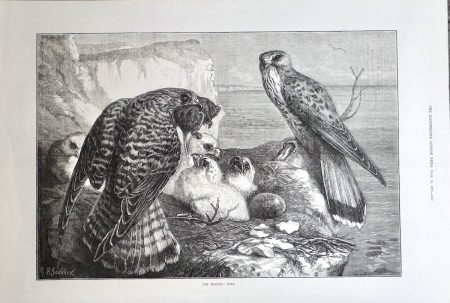 Antique Print, the Months: June, 1871