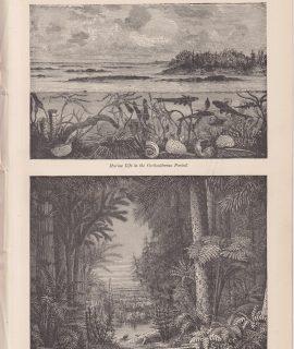 Antique Print, Geology, Carboniferous Period, 1890