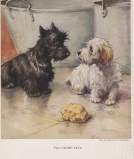 Vintage Print, Two Grubby Dogs, 1909