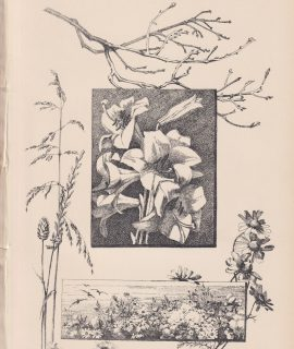 Antique Print, Drawing, Flowers, 1870
