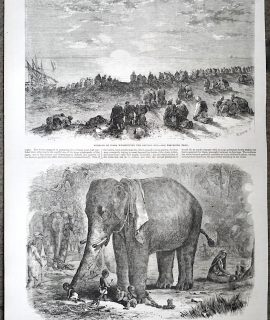 Antique Print, An Elephant; Guebers of India, 1863