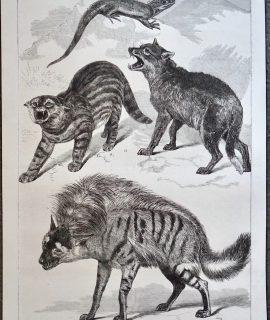 Antique Print, Animals, 1868