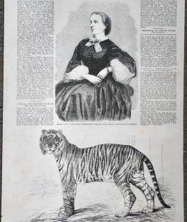 Antique Print, Tiger; Mdlle Lotti, 1859