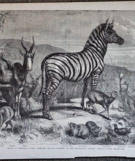 Antique Print, Group of Animals, 1861