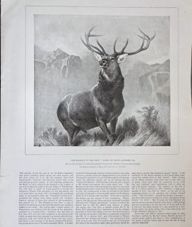 Vintage Print, The Monarch of the glen, 1892