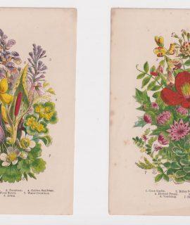 Lot of 2 botanical antique prints, 1870