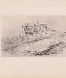 Antique Print, Hunting, 1884