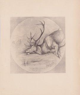 Antique Print, Hunting, 1885